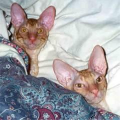 Catnap1