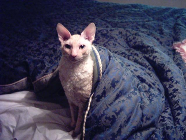 Merlin_in_bed_June2004